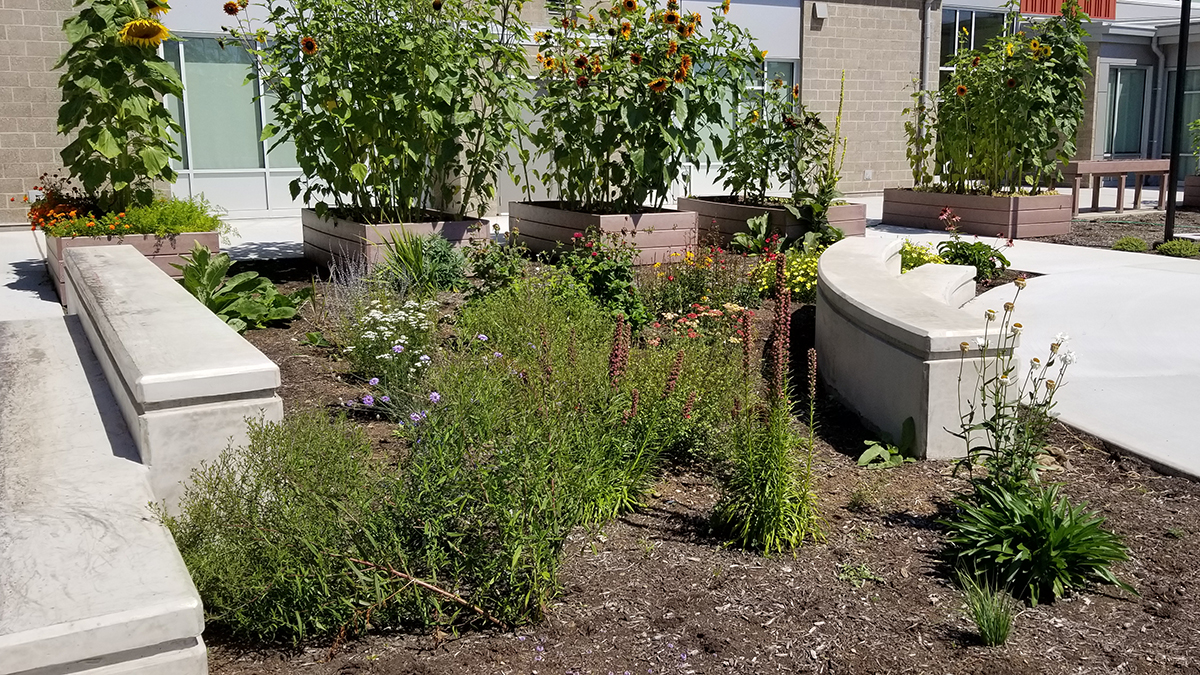 A butterfly garden with native plants in the learning courtyard at Ogden Elementary school in Vancouver, Washington.
