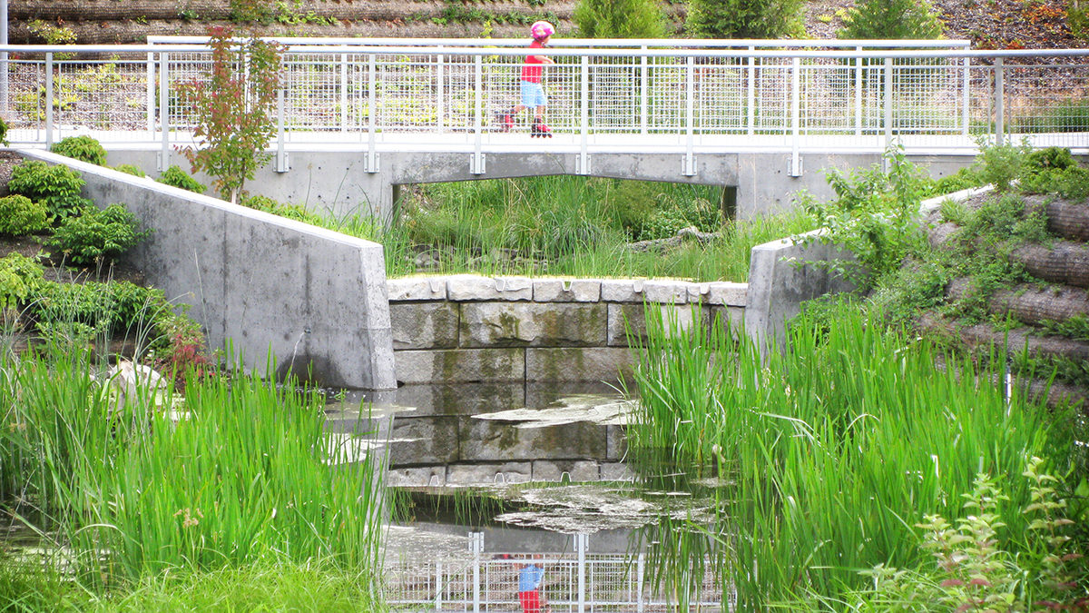 A child roller skates across a bridge spanning the Thornton Creek Water Quality Channel. With the channel, a variety of native grasses grow alongside the banks of the water body.